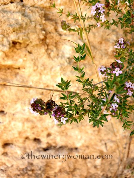 Flowers3_3.24.19_TWW