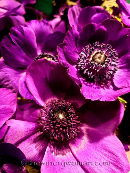Flowers4_3.22.19_TWW
