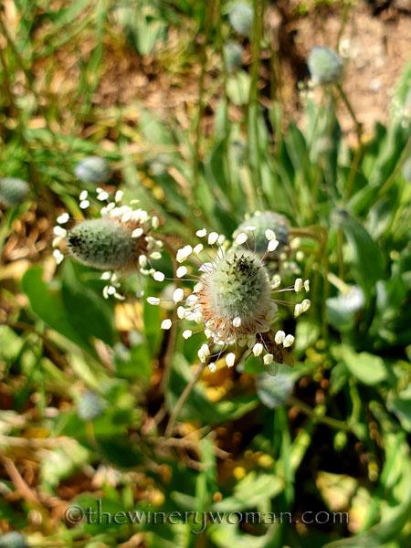 Flowers4_3.24.19_TWW