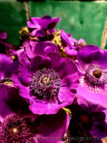 Flowers5_3.22.19_TWW