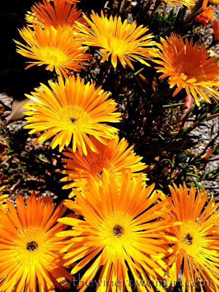 Flowers6_3.22.19_TWW