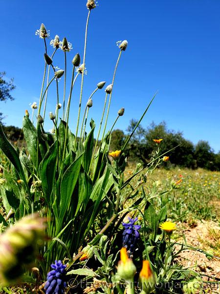Flowers6_3.24.19_TWW