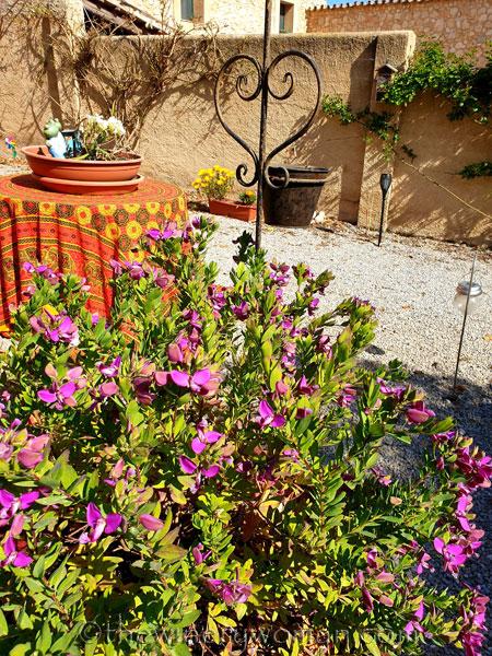 Flowers7_3.22.19_TWW