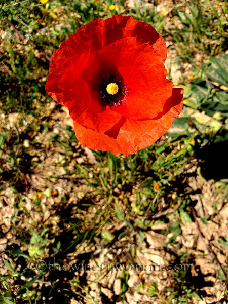 Flowers7_3.24.19_TWW