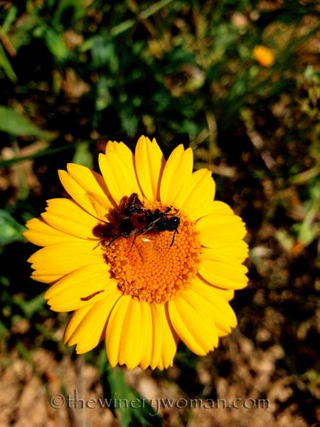 Flowers8_3.24.19_TWW