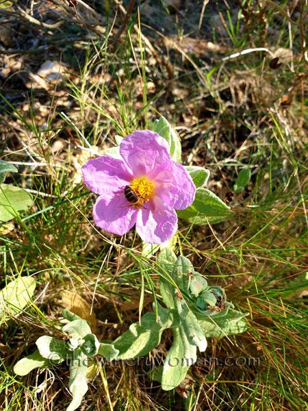 Flowers9_3.24.19_TWW