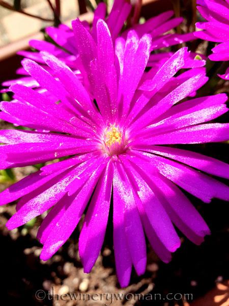 Flowers_3.21.19_TWW