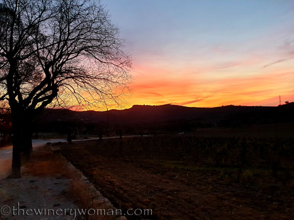 Sunset_Vineyard4_3.9.19_TWW