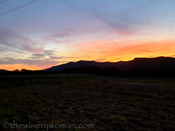 Sunset_Vineyard5_3.9.19_TWW