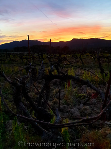 Sunset_Vineyard7_3.9.19_TWW