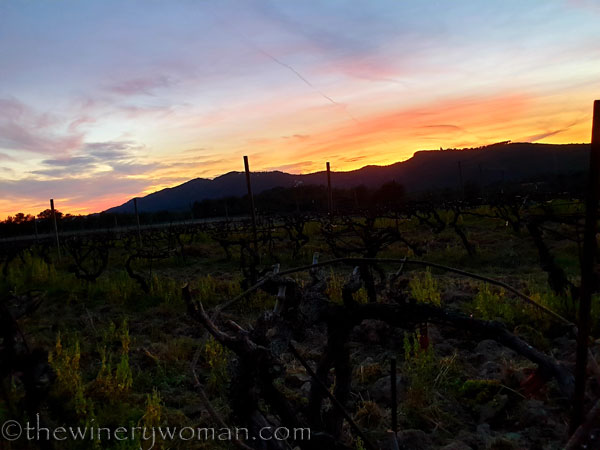 Sunset_Vineyard8_3.9.19_TWW