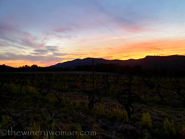 Sunset_Vineyard9_3.9.19_TWW