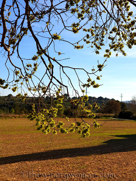 Tree_Spring_3.16.19_TWW