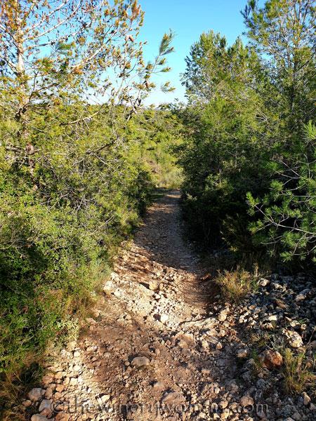 Walk_in_the_woods15_3.11.19_TWW