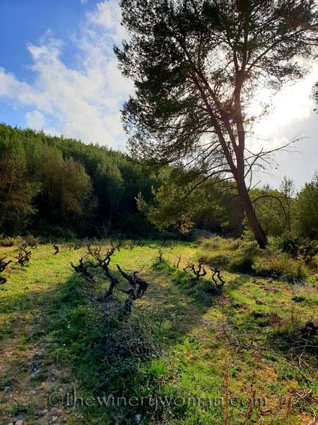 Walk_in_the_woods24_3.11.19_TWW