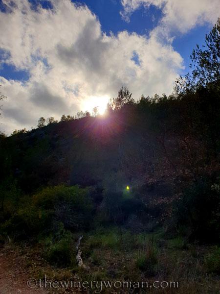 Walk_in_the_woods26_3.11.19_TWW