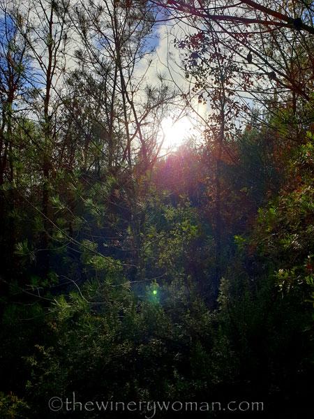 Walk_in_the_woods27_3.11.19_TWW