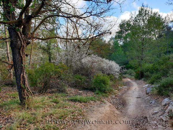 Walk_in_the_woods29_3.11.19_TWW