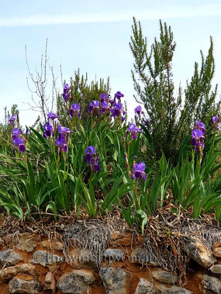 Irises10_4.14.19_TWW