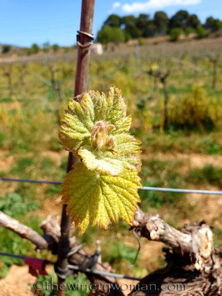 Spring_Vines10_4.12.19_TWW