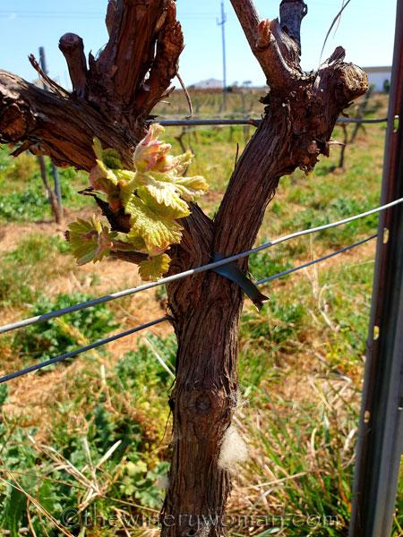 Spring_Vines11_4.12.19_TWW