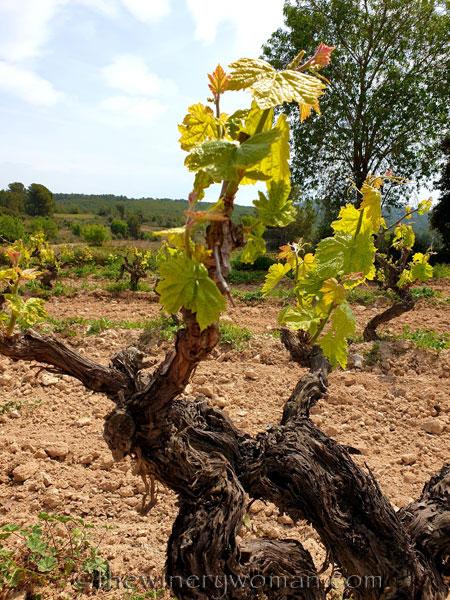 Spring_Vines11_4.14.19_TWW