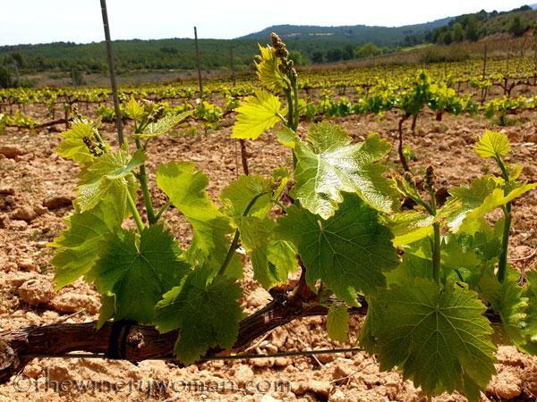 Spring_Vines15_4.14.19_TWW