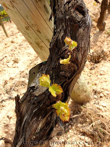 Spring_Vines18_4.14.19_TWW