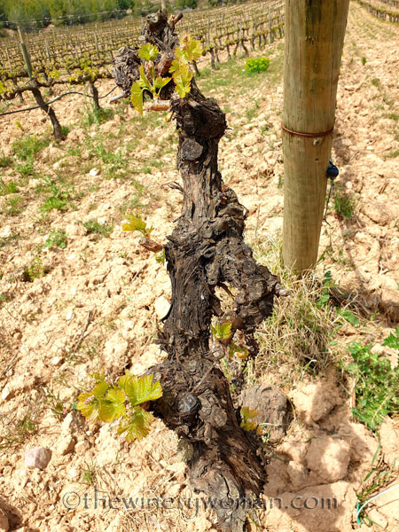 Spring_Vines21_4.14.19_TWW