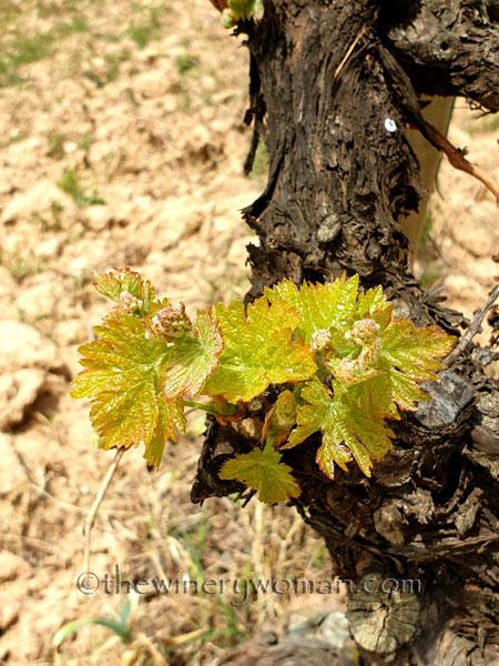 Spring_Vines22_4.14.19_TWW