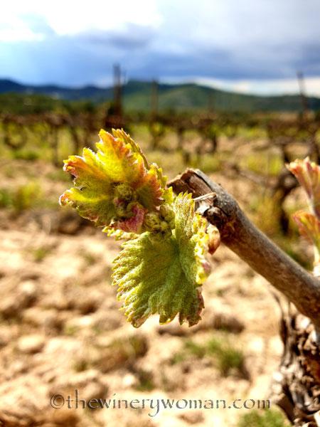 Spring_Vines2_4.12.19_TWW