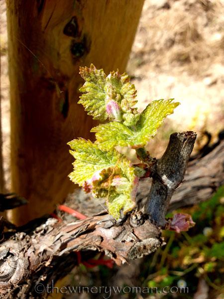 Spring_Vines3_4.12.19_TWW