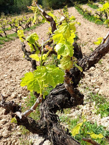 Spring_Vines3_4.14.19_TWW