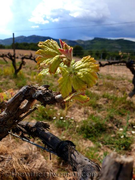 Spring_Vines4_4.12.19_TWW