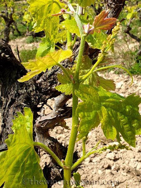 Spring_Vines4_4.14.19_TWW