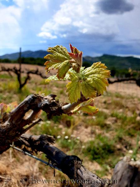 Spring_Vines5_4.12.19_TWW