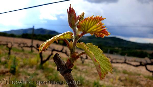 Spring_Vines6_4.12.19_TWW
