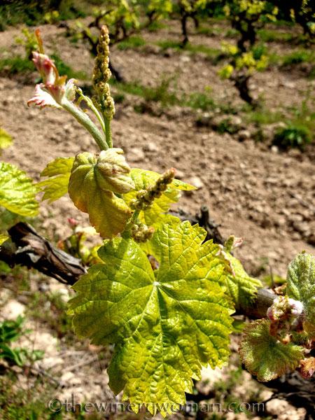 Spring_Vines6_4.14.19_TWW