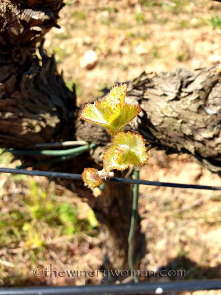 Spring_Vines8_4.12.19_TWW