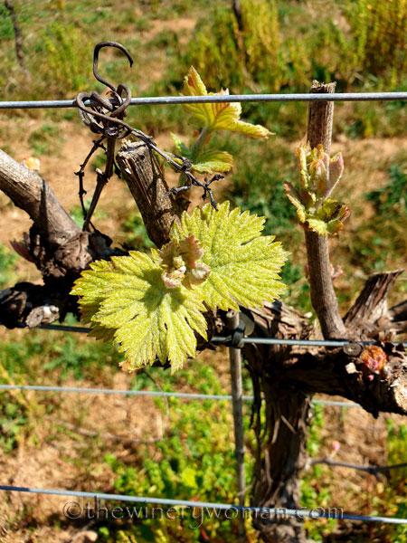 Spring_Vines9_4.12.19_TWW
