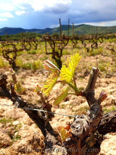 Spring_Vines_4.12.19_TWW