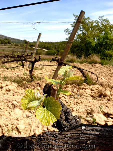 Spring_Vines_4.14.19_TWW