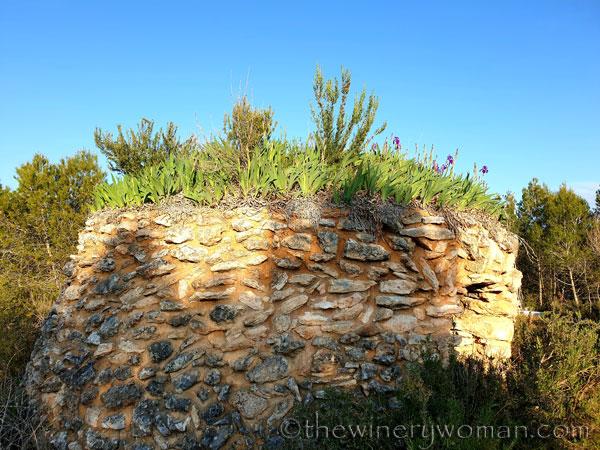 Stone_hut_Irises14_4.1.19_TWW