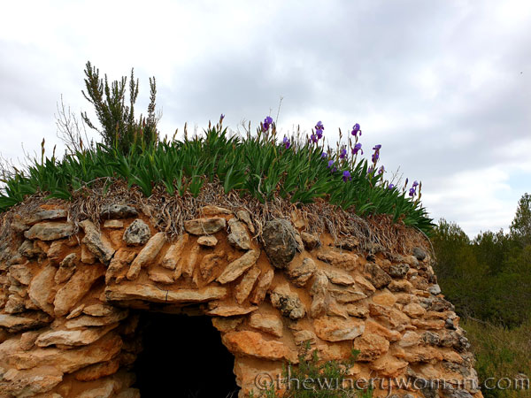 Stone_hut_Irises_3.31.19_TWW