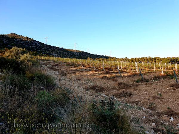 Walk_in_the_vineyard11_4.1.19_TWW