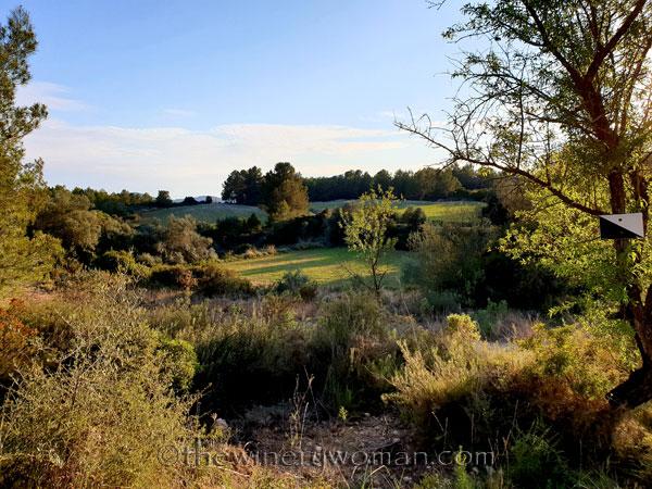 Walk_in_the_vineyard3_4.1.19_TWW