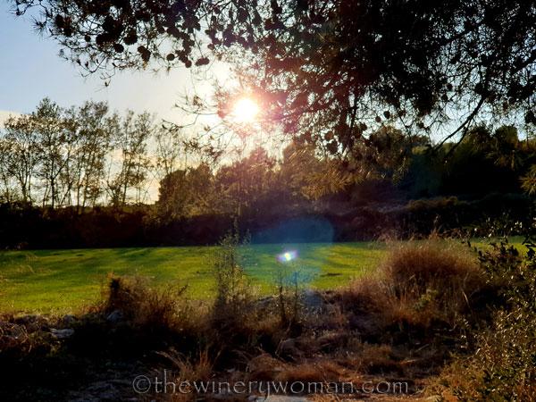 Walk_in_the_vineyard_4.1.19_TWW