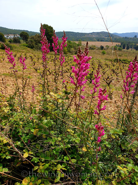 Wildflowers12_4.14.19_TWW