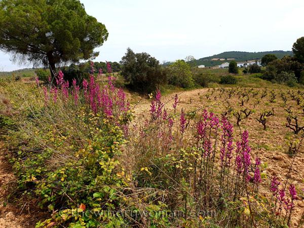 Wildflowers15_4.14.19_TWW