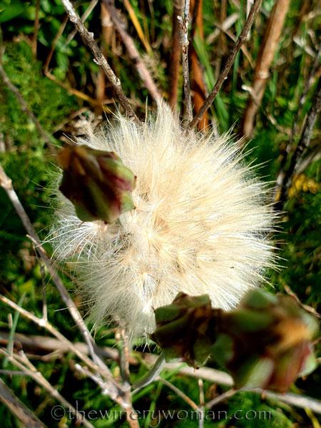 Wildflowers2_4.14.19_TWW